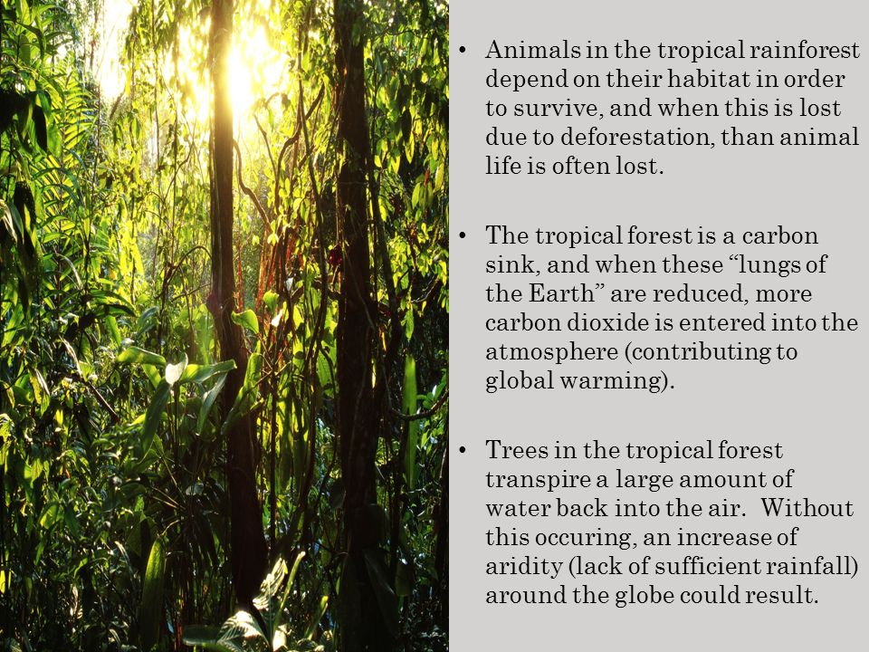 the survival of the rainforests depends on human compassion Human anatomy & physiology: help and review  animals often depend on other species to survive,  tropical rainforest animal adaptations related study materials related.