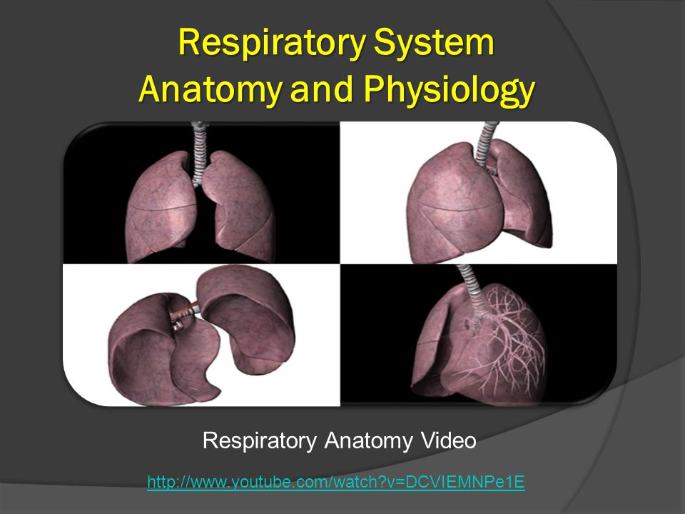 an analysis of the respiratory system Fetal pig dissection lab answers the major organ in the respiratory system that provides oxygen to the deoxygenated blood coming from the heart and analysis.