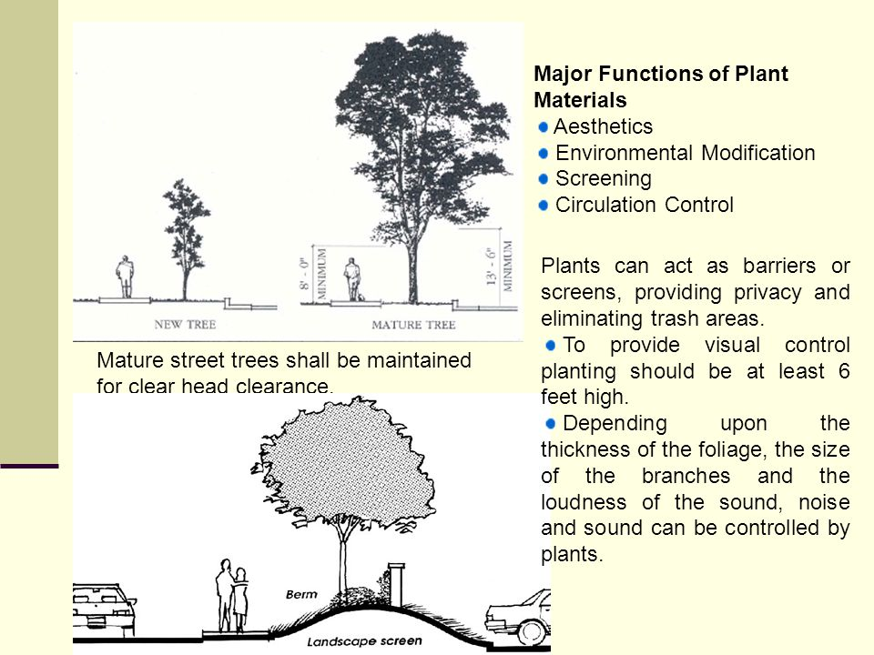 Major Functions of Plant Materials