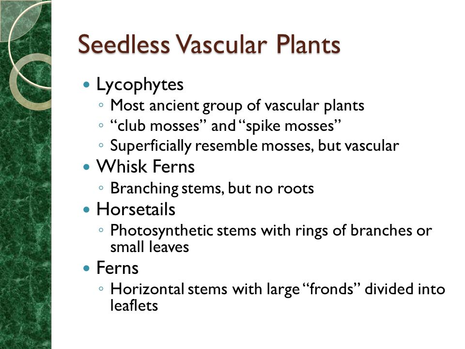 name three major types vascular plants and discuss each lo What are the different types of vascular bundles found in plants according to relative position of xylem and phloem, the vascular bun­dles are classified variously.
