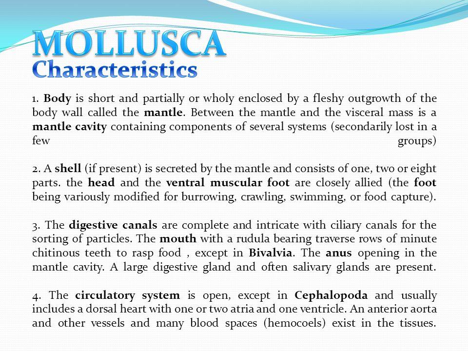Mollusca Characteristics