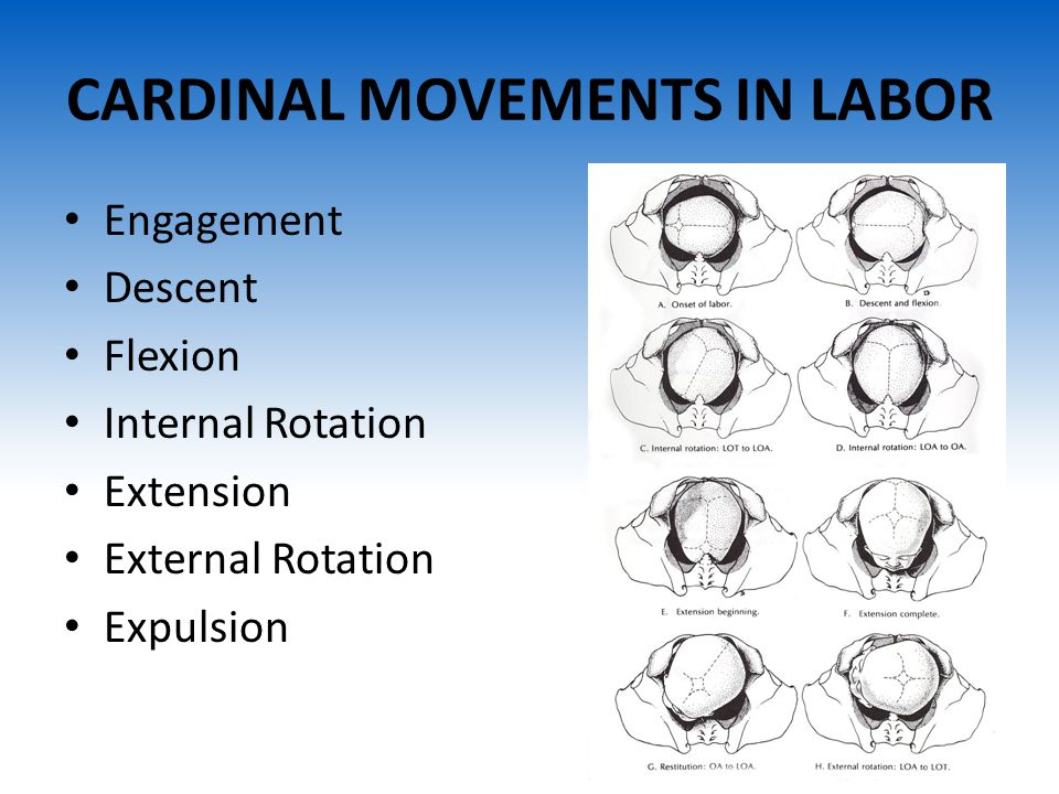CARDINAL MOVEMENTS IN LABOR
