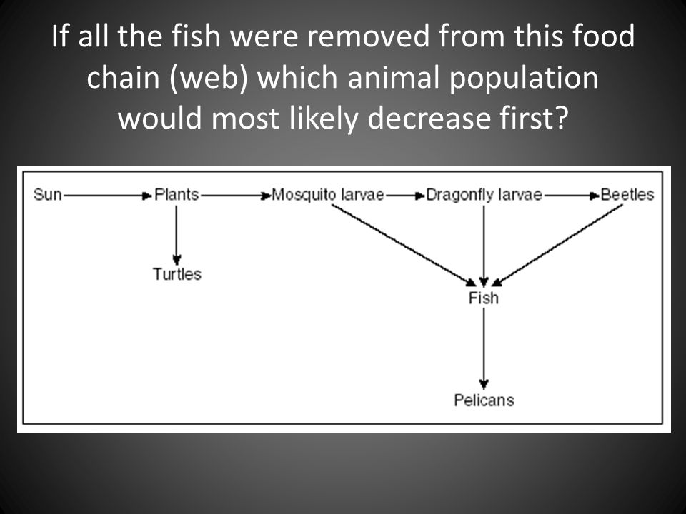 If all the fish were removed from this food chain (web) which animal population would most likely decrease first