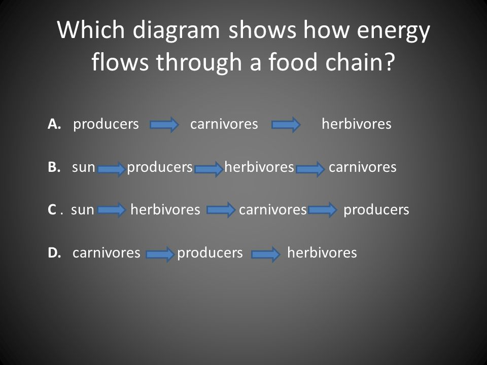 Which diagram shows how energy flows through a food chain