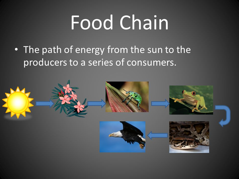 Food Chain The path of energy from the sun to the producers to a series of consumers.