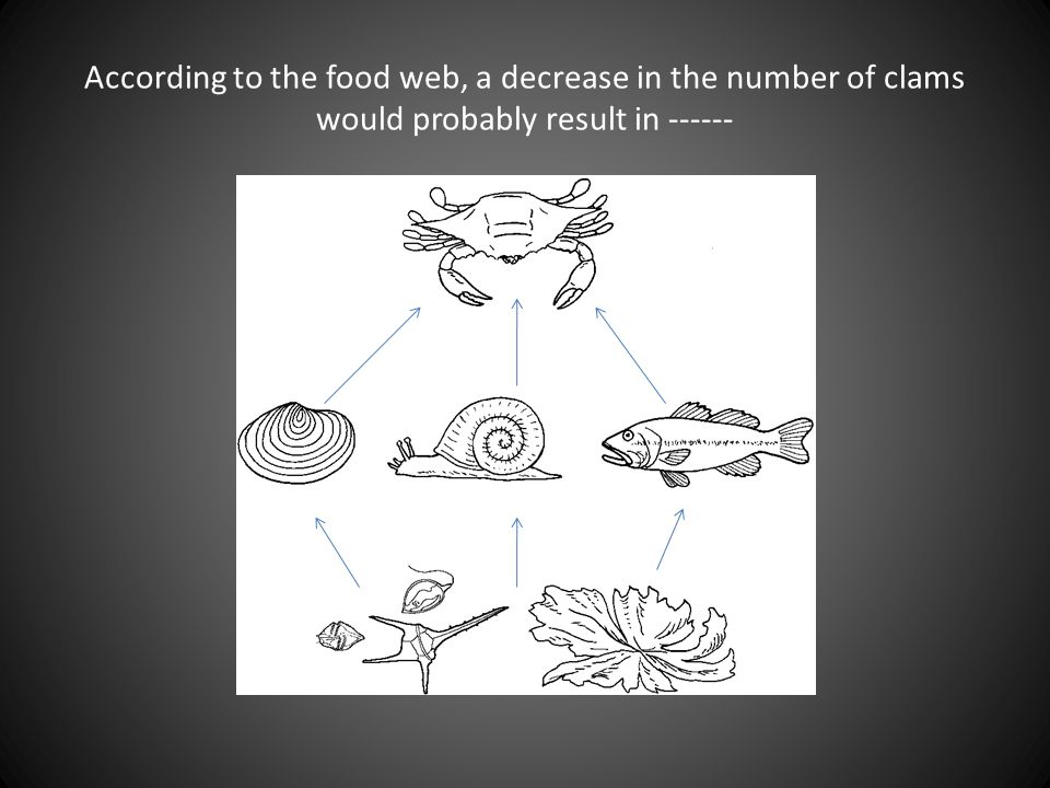 According to the food web, a decrease in the number of clams would probably result in