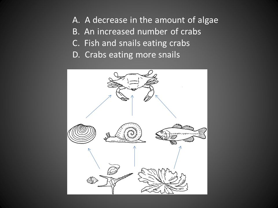 A. A decrease in the amount of algae. B. An increased number of crabs