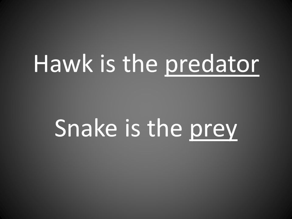 Hawk is the predator Snake is the prey