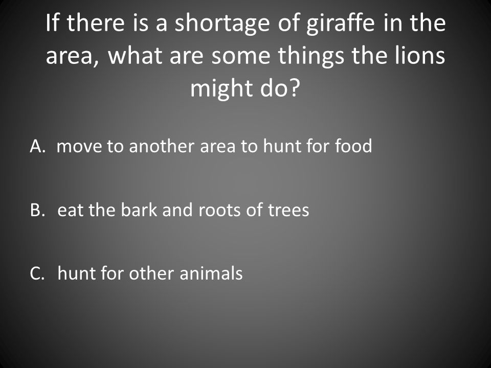 If there is a shortage of giraffe in the area, what are some things the lions might do