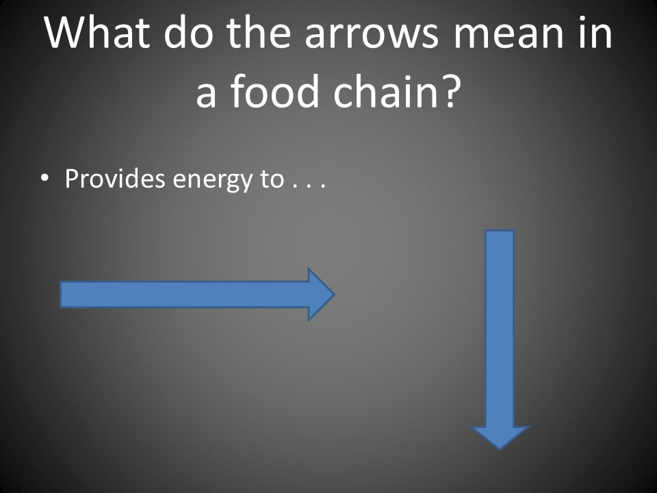What do the arrows mean in a food chain