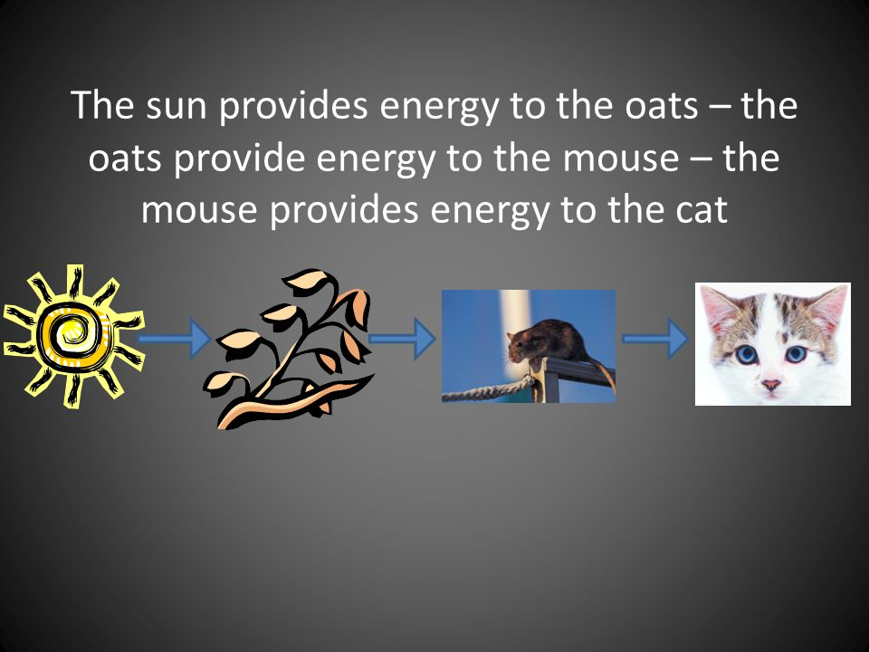 The sun provides energy to the oats – the oats provide energy to the mouse – the mouse provides energy to the cat