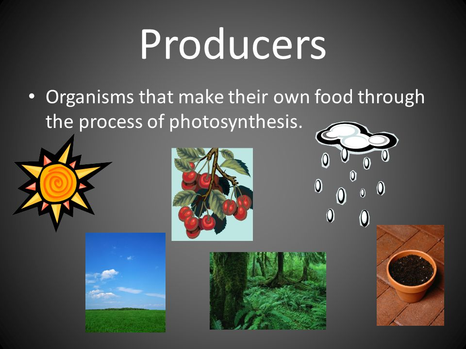 Producers Organisms that make their own food through the process of photosynthesis.