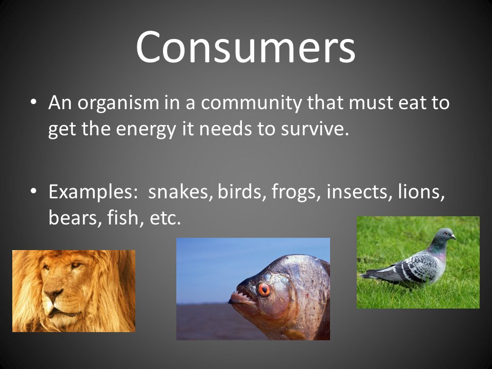 Consumers An organism in a community that must eat to get the energy it needs to survive.