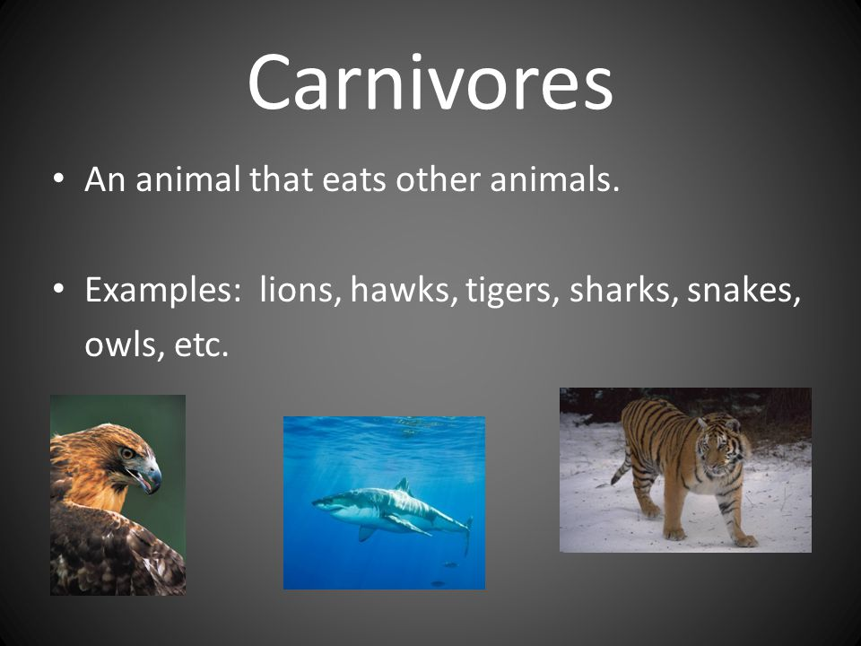 Carnivores An animal that eats other animals.