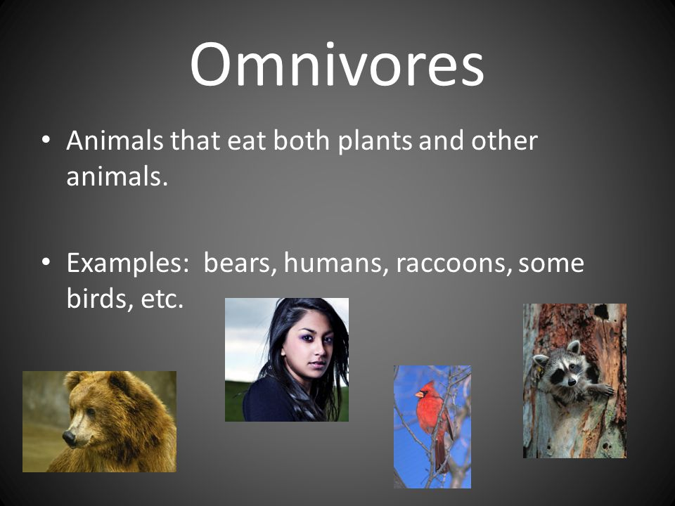 Omnivores Animals that eat both plants and other animals.