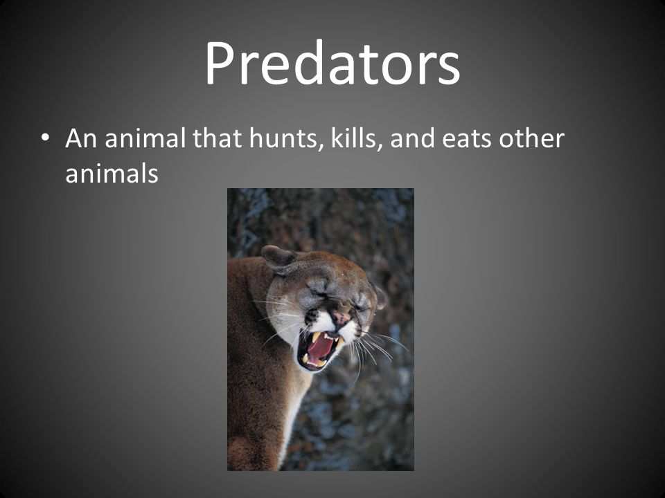 Predators An animal that hunts, kills, and eats other animals