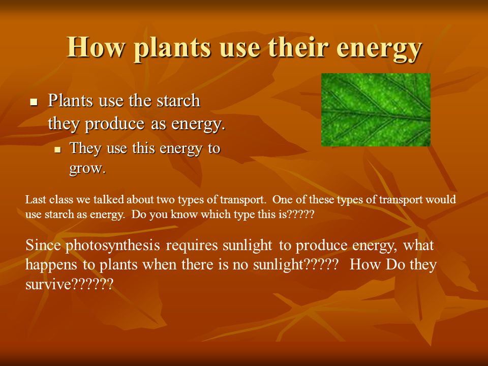 Photosynthesis and cellular respiration ppt video online for What do we use trees for