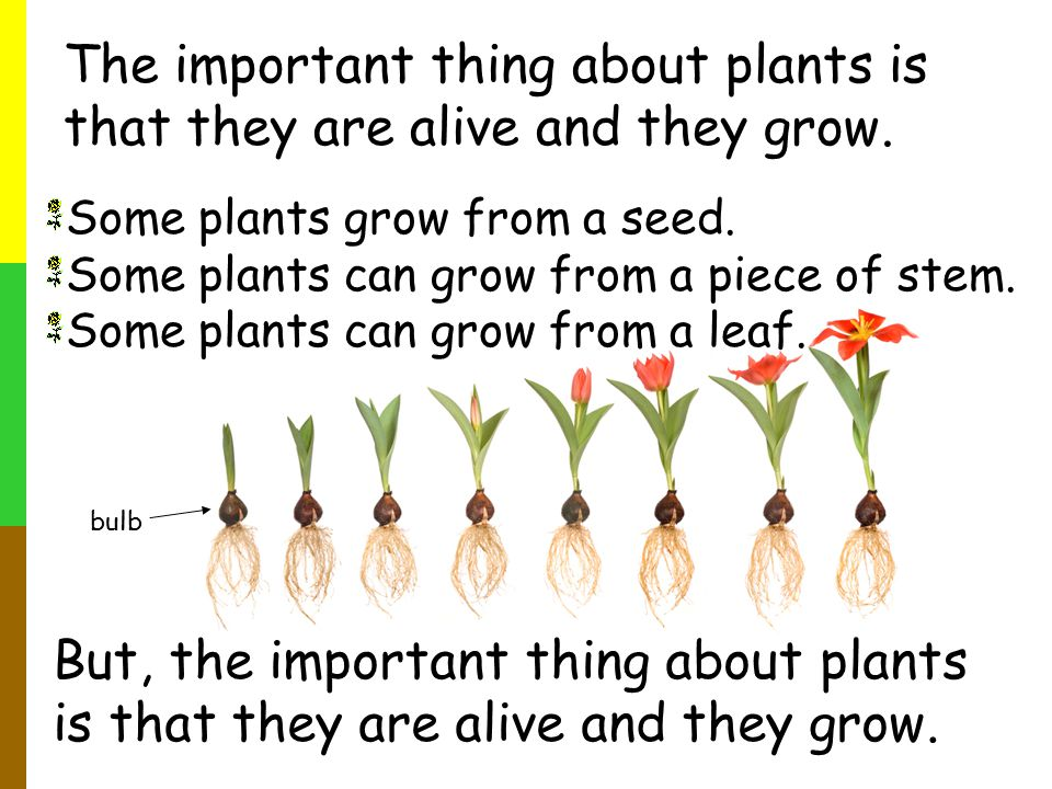 The important thing about plants is that they are alive and they grow.