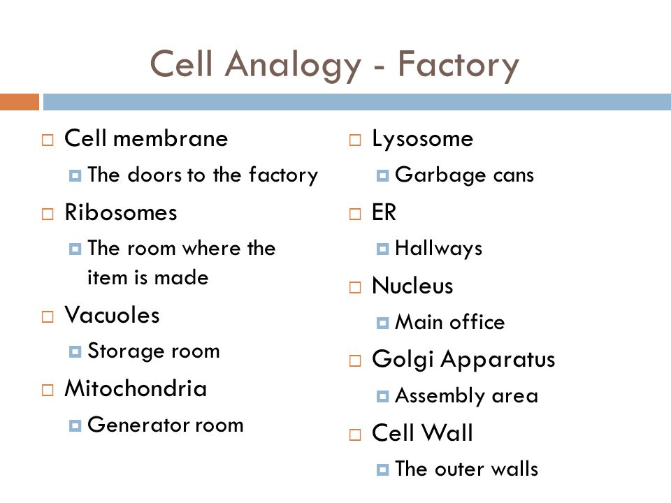 Cell Analogy - Factory Cell membrane Ribosomes Vacuoles Mitochondria