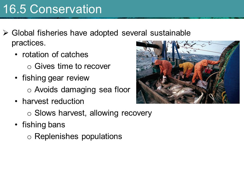 16.5 Conservation Global fisheries have adopted several sustainable practices. rotation of catches.