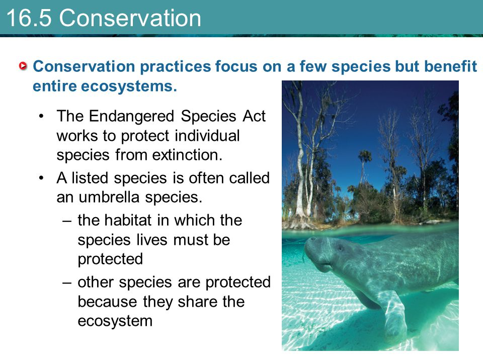 16.5 Conservation Conservation practices focus on a few species but benefit entire ecosystems.