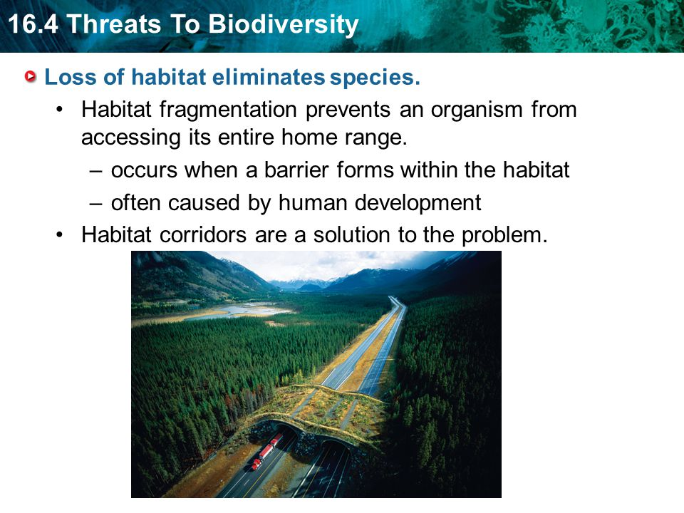 Loss of habitat eliminates species.