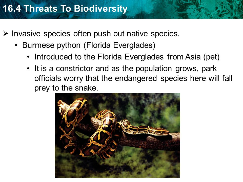 Invasive species often push out native species.