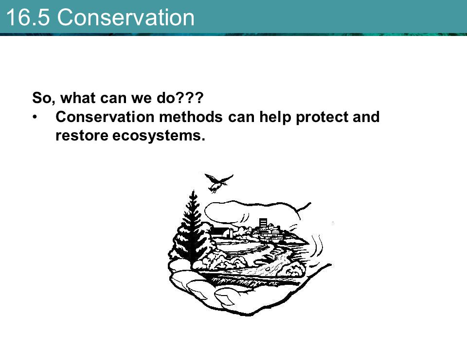 16.5 Conservation So, what can we do