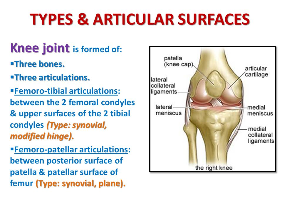 Knee Joint Ankle Joint Hip Joint Ppt Download
