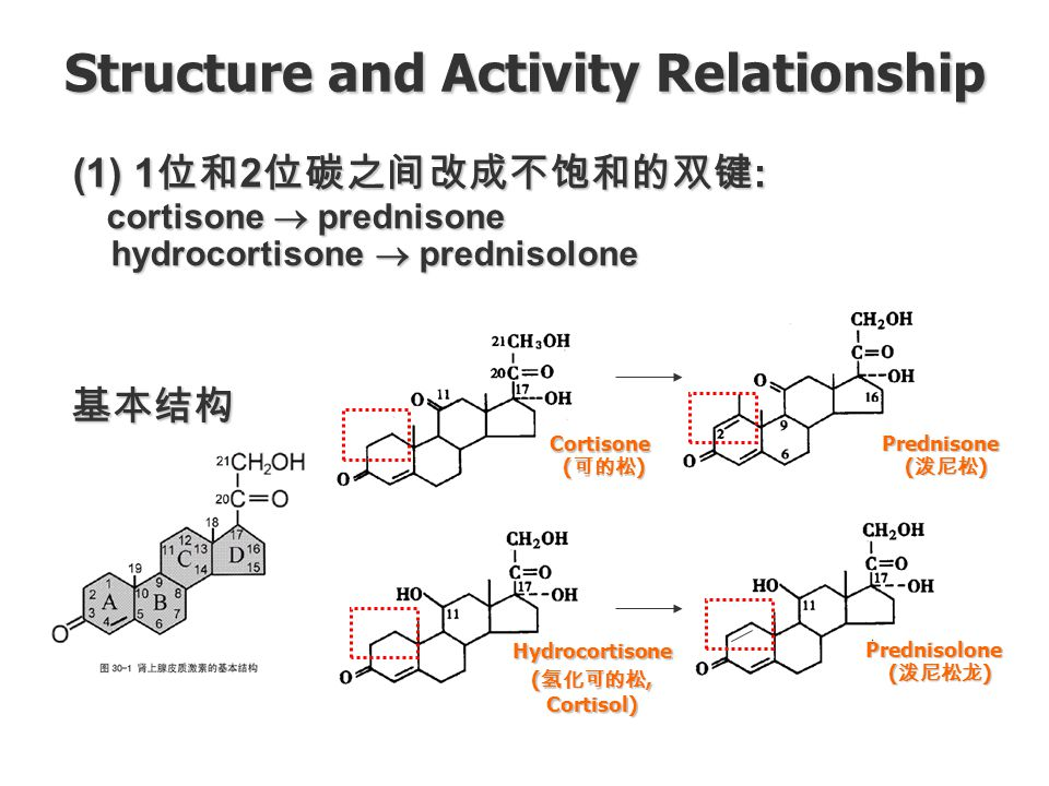 structure activity relationship of steroids pptx