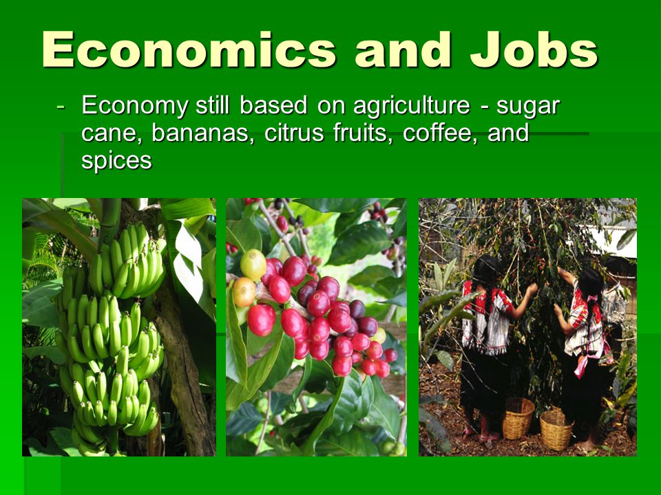 Economics and Jobs Economy still based on agriculture - sugar cane, bananas, citrus fruits, coffee, and spices.