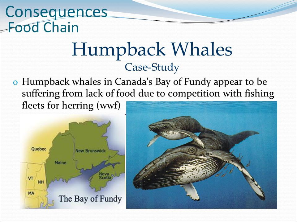 A case study on the whale