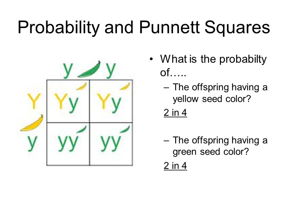 probability punnett squares ppt video online download. Black Bedroom Furniture Sets. Home Design Ideas