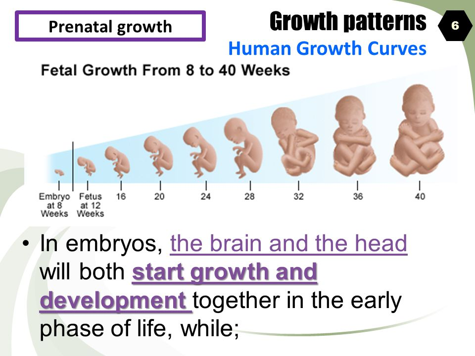 Growth patterns Human Growth Curves. Prenatal growth. 6.