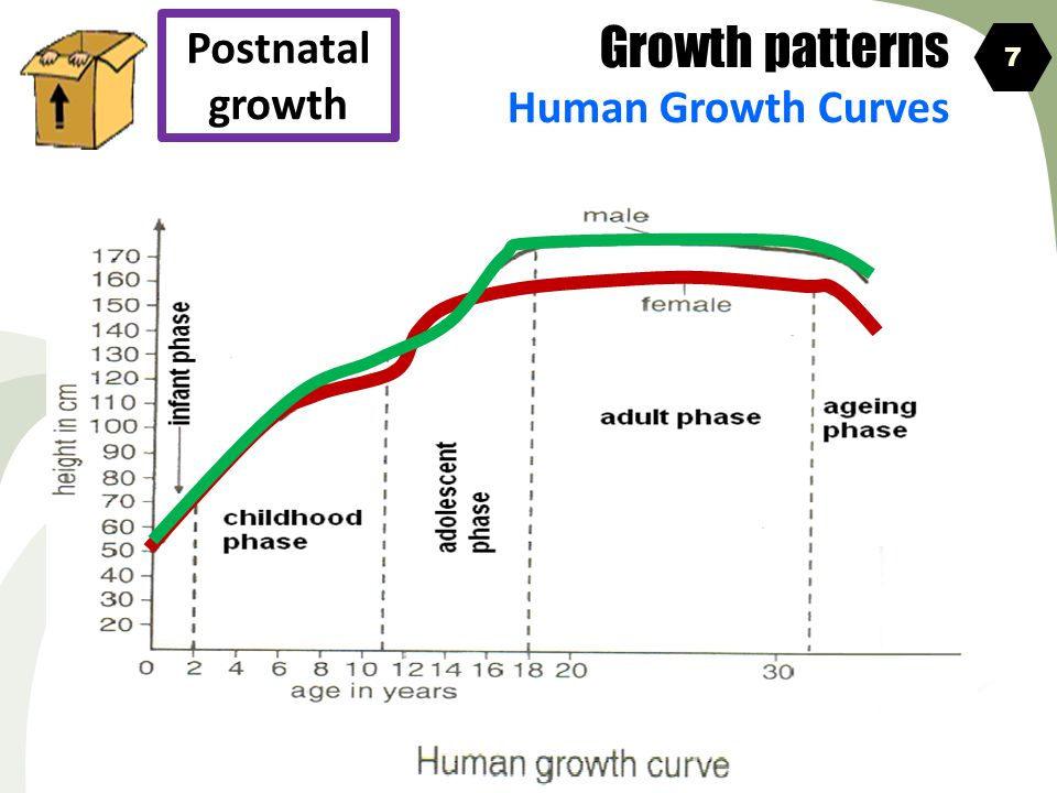 Growth patterns Human Growth Curves Postnatal growth 7
