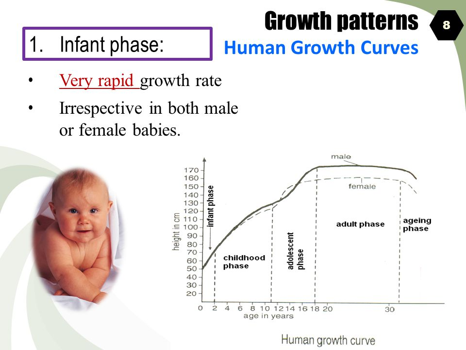 Growth patterns Infant phase: Human Growth Curves