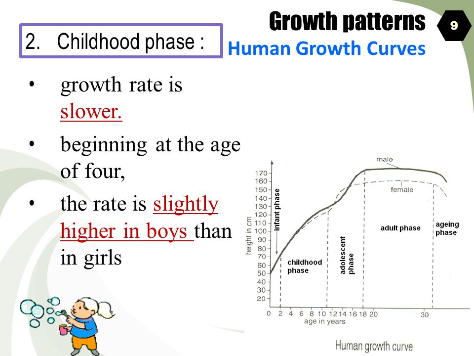 Growth patterns 2. Childhood phase : growth rate is slower.