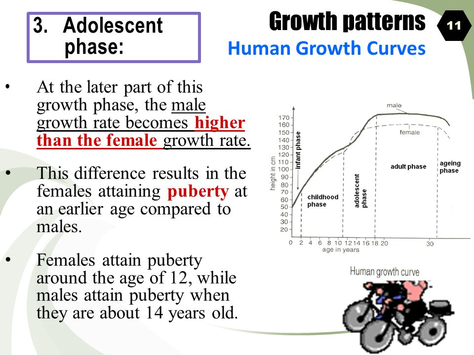 Growth patterns 3. Adolescent phase: Human Growth Curves