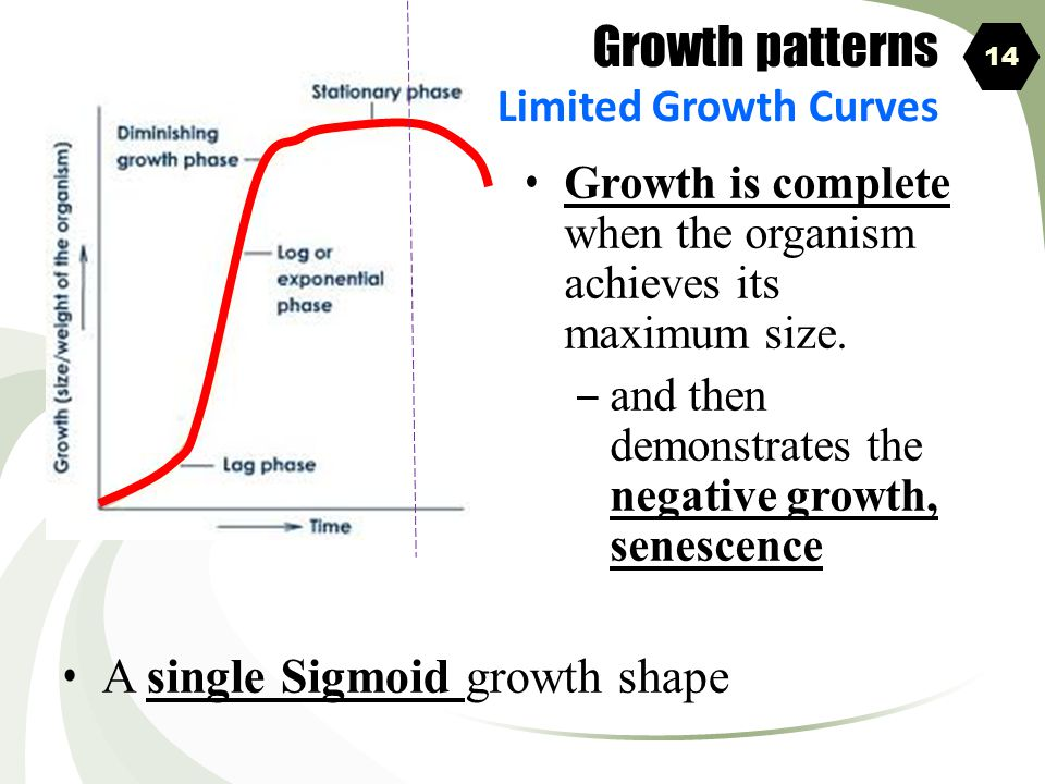 Growth patterns A single Sigmoid growth shape Limited Growth Curves
