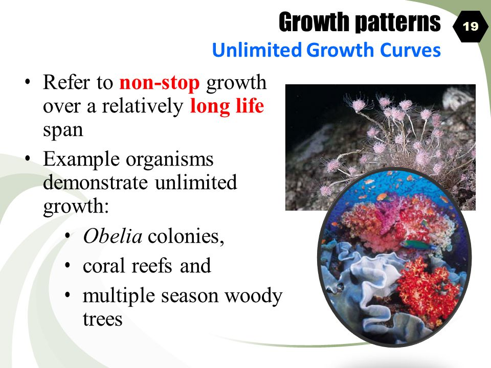Growth patterns Unlimited Growth Curves