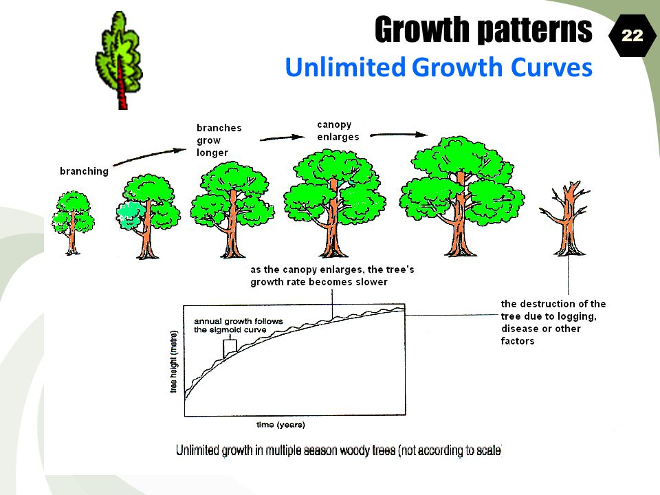 Growth patterns Unlimited Growth Curves 22