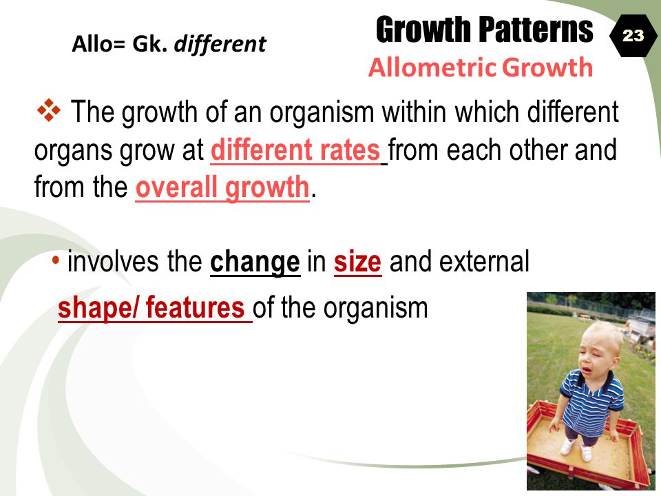 Growth Patterns Allometric Growth. 23. Allo= Gk. different.