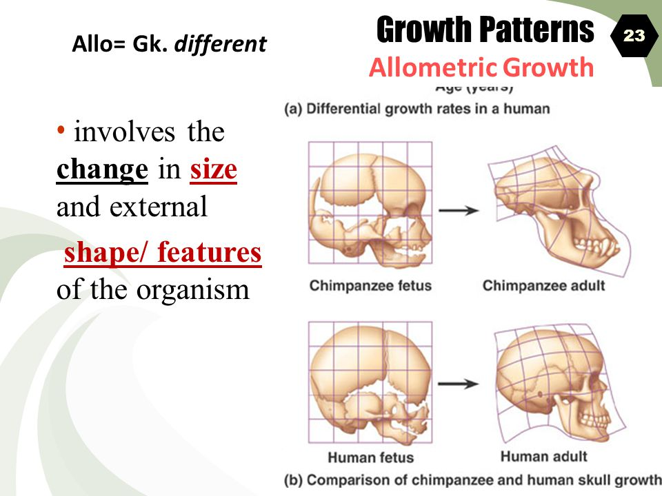 Growth Patterns involves the change in size and external