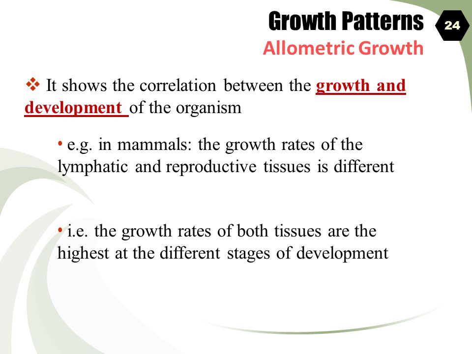 Growth Patterns Allometric Growth