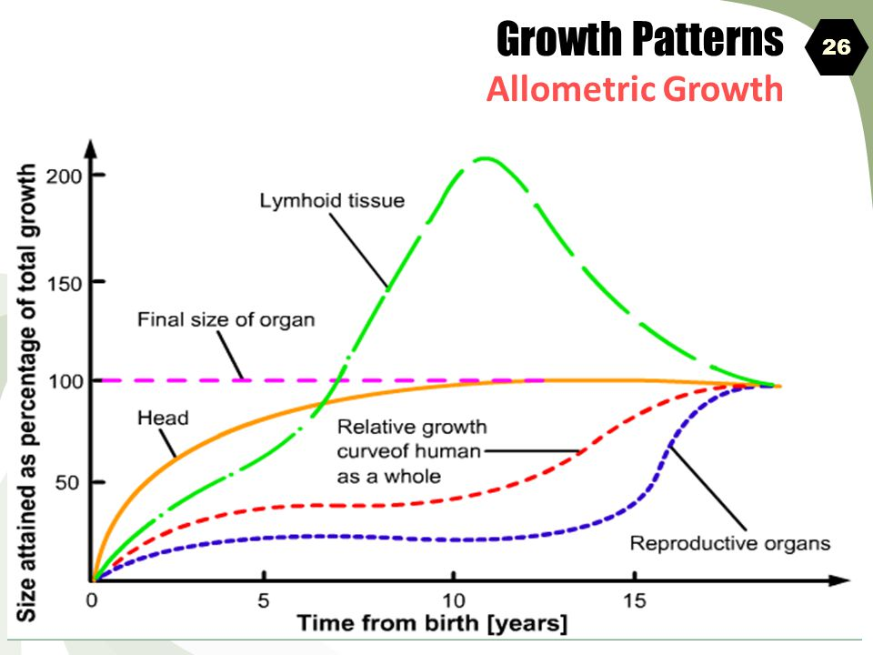 Growth Patterns Allometric Growth 26