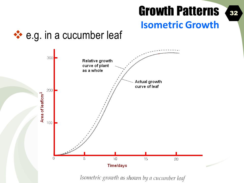 Growth Patterns Isometric Growth 32 e.g. in a cucumber leaf