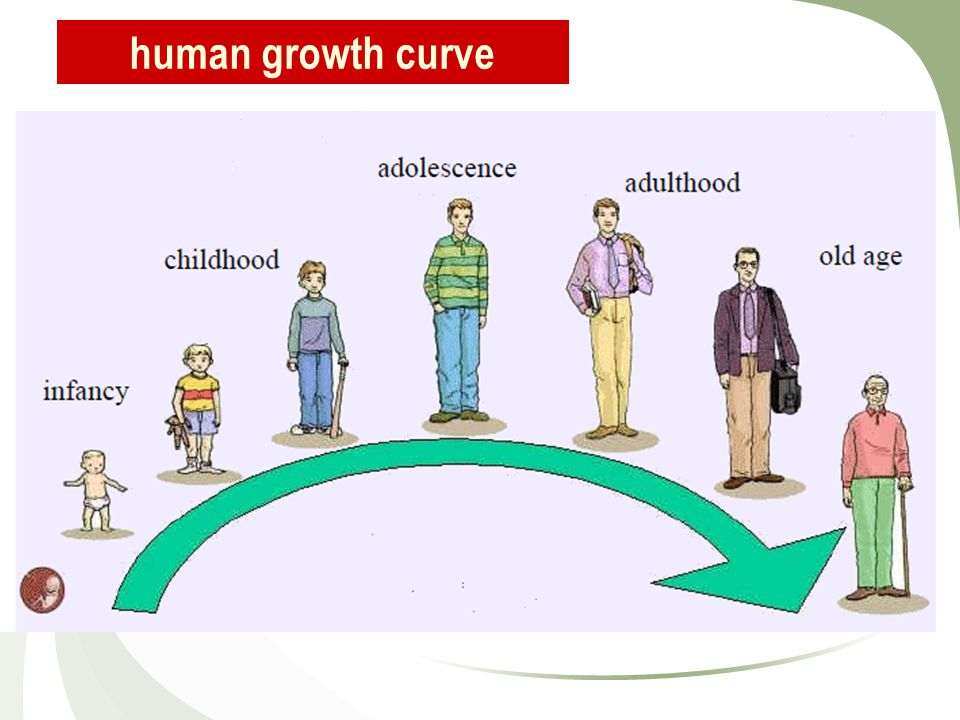 human growth curve