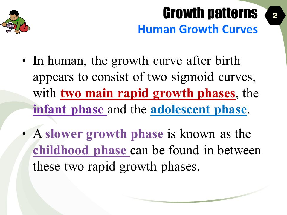 Growth patterns Human Growth Curves. 2.
