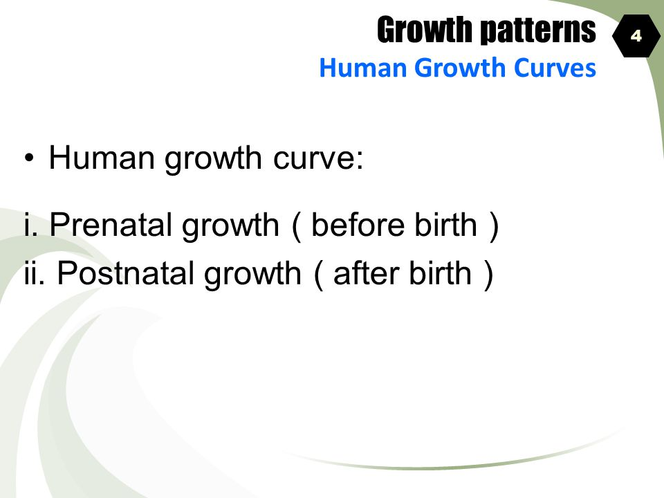 i. Prenatal growth ( before birth )