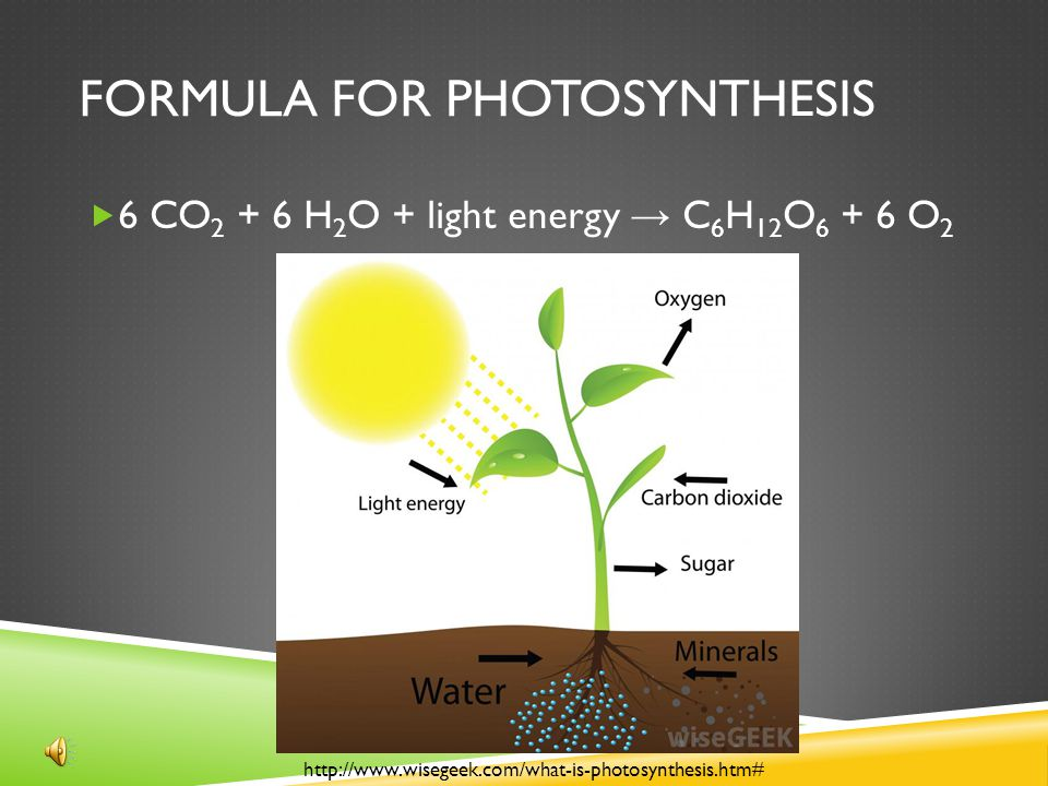 formula for photosynthesis Photosynthesis is the process used by plants, algae and certain bacteria to harness energy from sunlight into chemical energy there are two types of photosynthetic processes: oxygenic photosynthesis and anoxygenic photosynthesis oxygenic photosynthesis is the most common and is seen in plants.